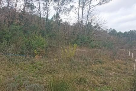 FLASSANS , terrain inconstructible boise de 5 hectares - Image 3