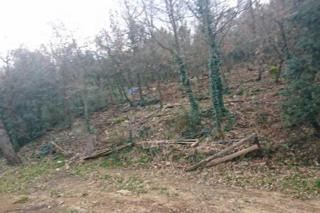 FLASSANS , terrain inconstructible boise de 5 hectares - Image 2